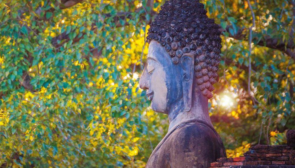 bouddha_profil_nature